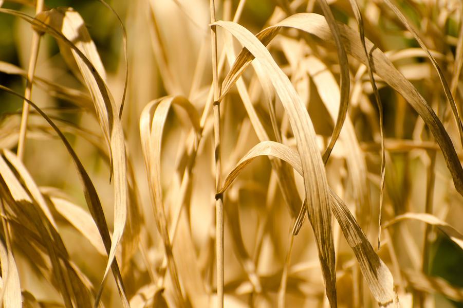 Rusza pomoc dla rolników