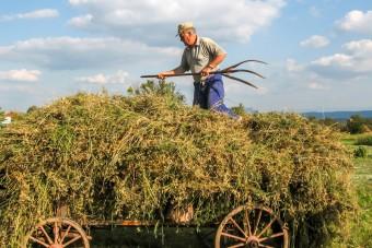 100 tys. zł mogą uzyskać rolnicy rozpoczynający pozarolniczą działalność gospodarczą na wsi.