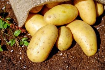 Ułatwienia w międzynarodowym handlu polskimi ziemniakami
