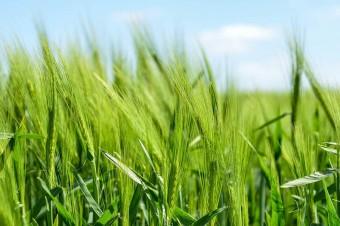 Lab-on-chip - nadchodzi rewolucja w rolnictwie