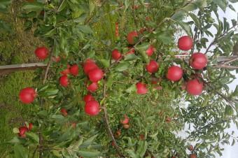 Owocna współpraca Netto z polskimi sadownikami