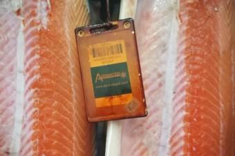 Jaka przyszłość łososia w Europie? Portugalczycy stawiają na lokalne produkty