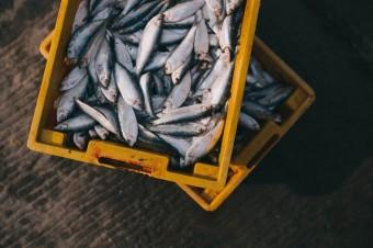 Zaczyna brakować ryb. Coraz większa konsumpcja grozi wyginięciem niektórych gatunków