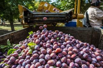 Nowe technologie owocują w kalifornijskich sadach