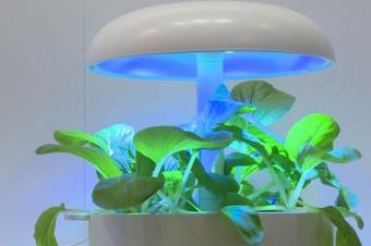 Technologia zaczerpnięta od NASA pozwala na uprawę roślin i warzyw w domu
