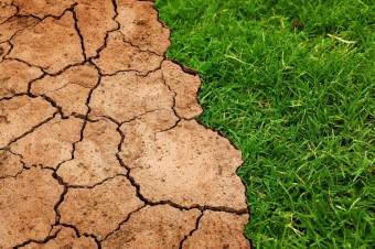 Zazielenienia a susza – odstępstwa