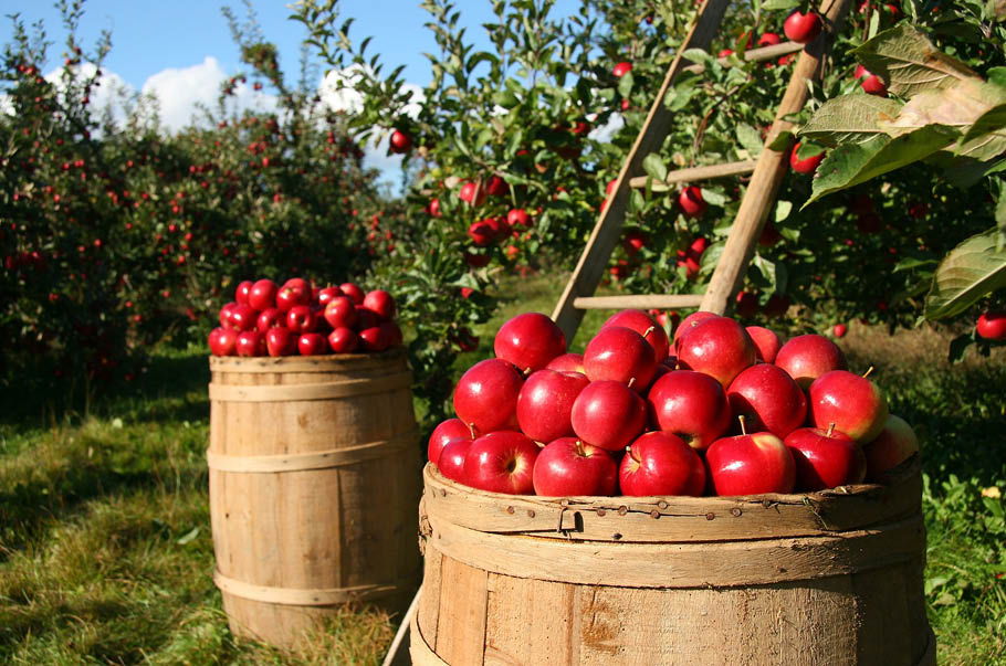 Stanowisko branży przetwórstwa owoców wobec protestów sadowników