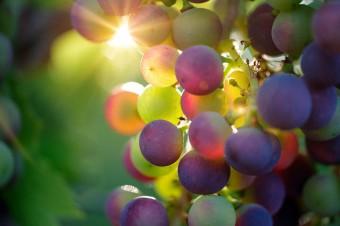 15 stycznia 2019 r. upływa termin składania w KOWR deklaracji dotyczących rynku wina