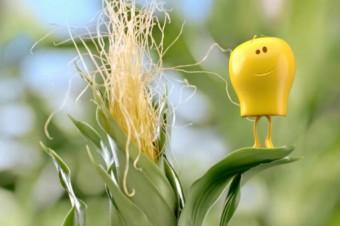 Reklama Bonduelle wspierająca kukurydzę już na ekranach!