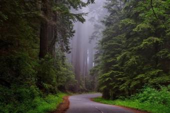 Lasy umierają z powodu suszy