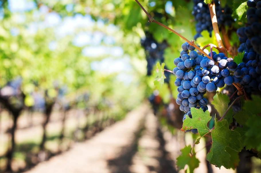 Winiarze chcą ratować polskie sadownictwo