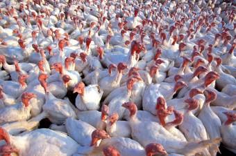 Ptasia grypa w województwie lubelskim