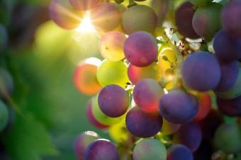 15 stycznia upływa termin składania deklaracji dot. rynku wina